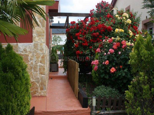 Rosales del jardín