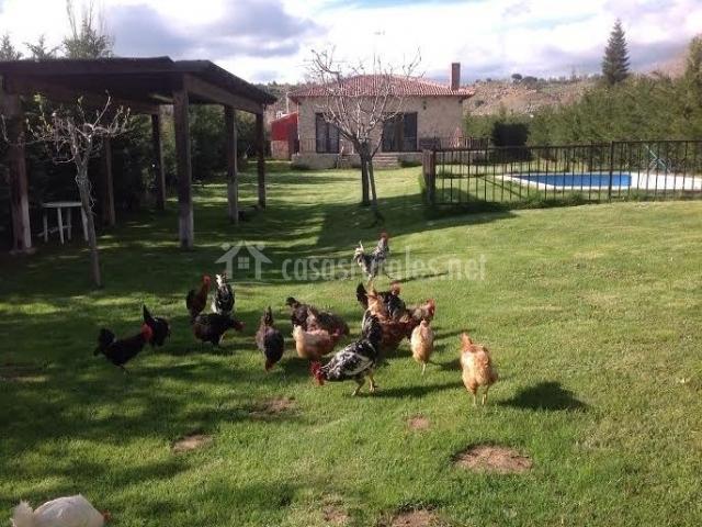 Vistas de los exteriores con gallinas