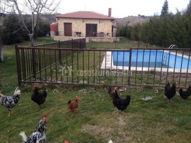 Vistas de nuestra piscina vallada