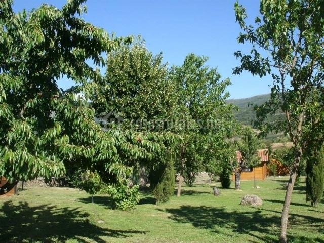 Jardín con árboles