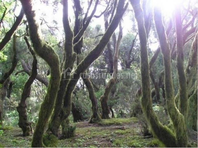 Bosques de troncos torcidos