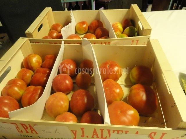 Tomates cultivados en la comarca