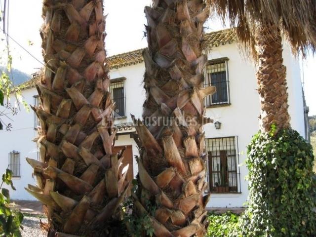 Vistas de los exteriores con palmeras