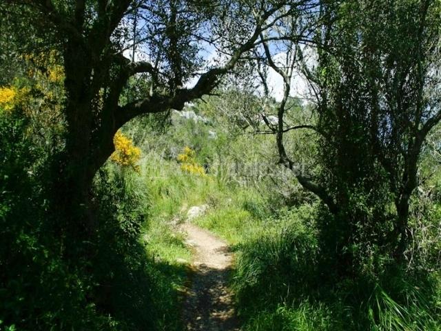 Zona del entorno natural