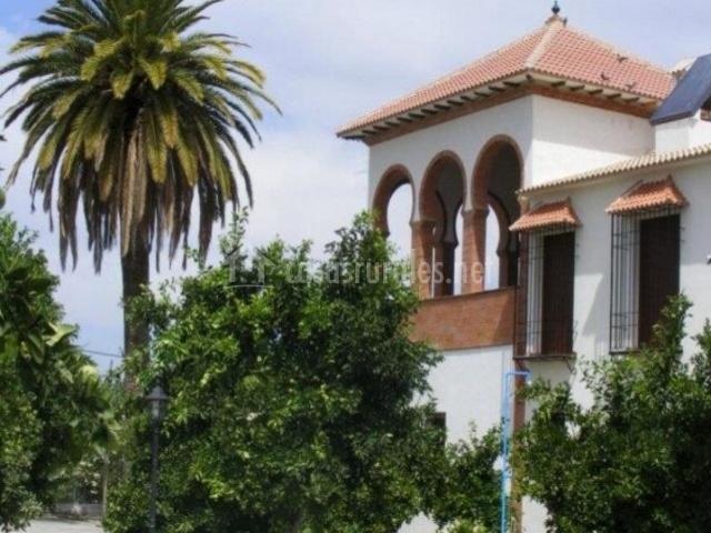 Vistas del exterior con palmera