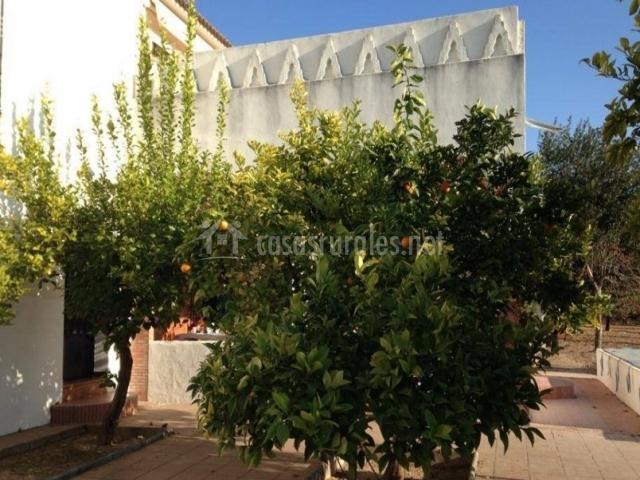 Vistas del patio con naranjos