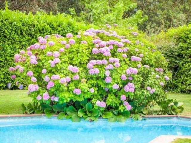 Vistas de la piscina con flores