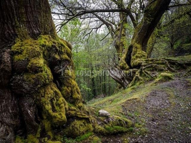 Zona natural de bosques