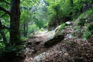 Bosque de Aigüestortes