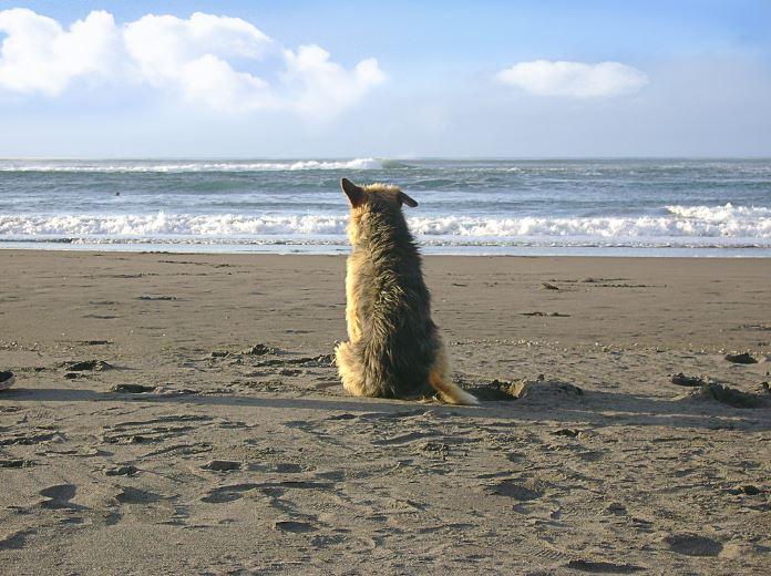 Perro contemplando el mar