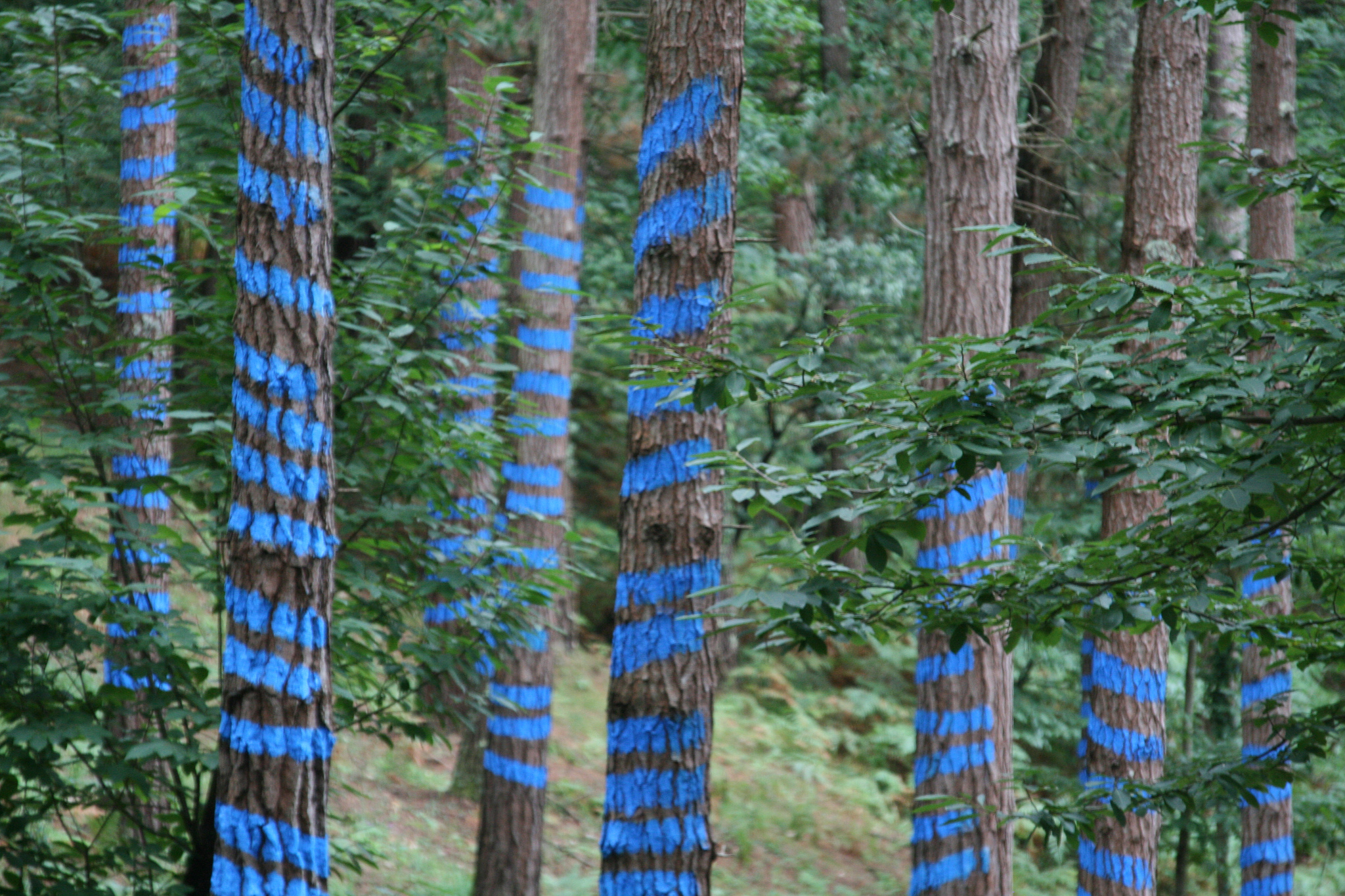 Bosque Oma azul