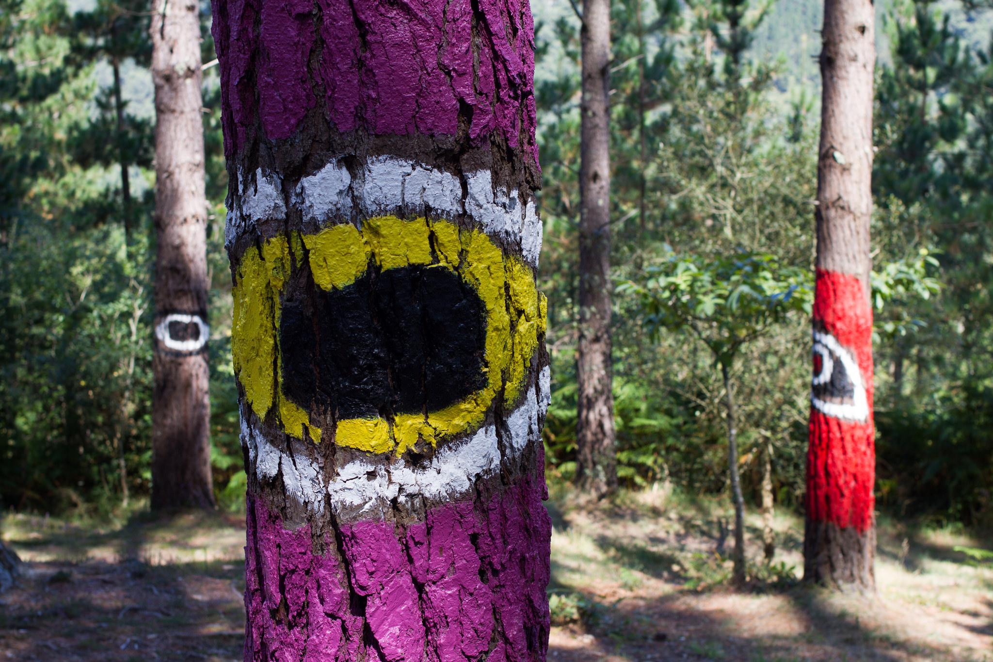 Pinturas bosque