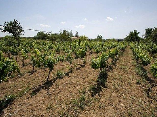 Las viñas de la finca (Casasrurales.net)
