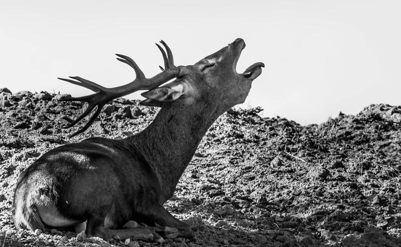 Rafael Chamorro fotógrafo naturaleza-FLICKR