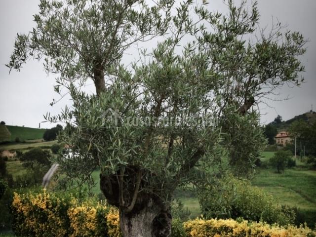 Casa la solana en santillana del mar cantabria for Posada el jardin santillana del mar