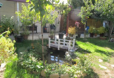 Garden with vegetation
