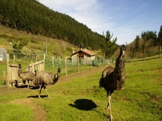 Fauna en el entorno