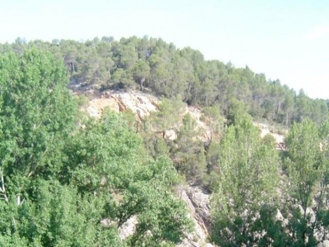 Jardín exterior con vistas a la montaña