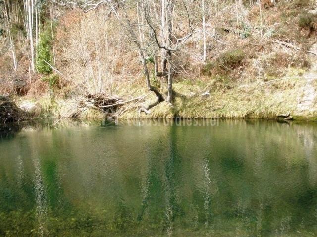 Río con plantas en el entorno