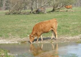 Animales en el entorno bebiendo agua