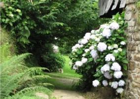 Plantaciones del jardín