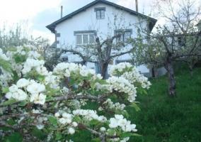 Fachada casa, jardín y árboles frutales
