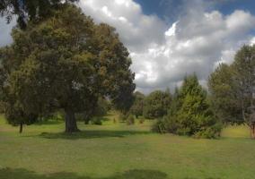 Bosques de Sabina Albar