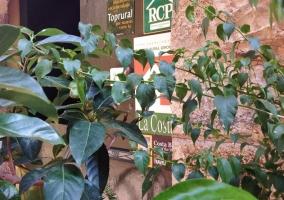 Entrada a la vivienda con hojas y fachada de piedra