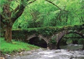 Puente en la Finca de Artikutza