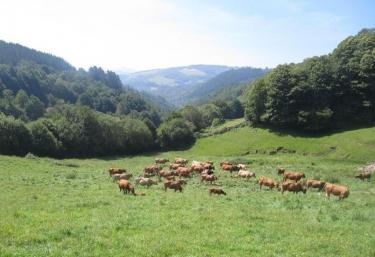 Zona natural de pastos
