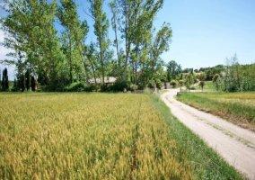 Camino hacia la Casa Rural