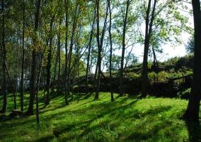 Exteriores con abundantes árboles