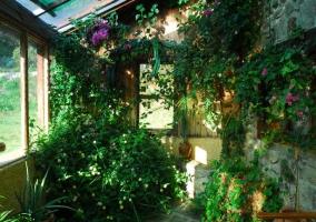 Vegetación en sala cubierta