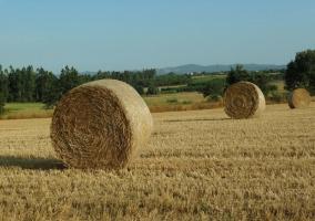 Entorno con cultivos