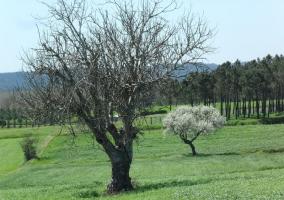 Entorno y arboles