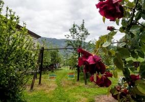 Jardín y casa de fondo