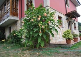 Plantas de decoracion en el jardin