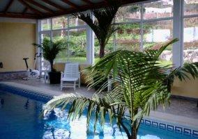 Vistas de la piscina con palmeras