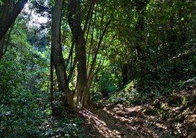 Zona de bosques en La Esperanza