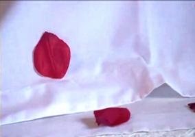 Detalle de los pétalos de rosas en la cama