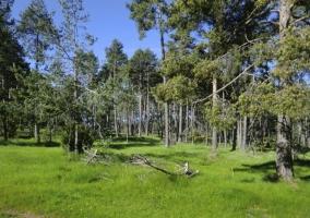 Bosques en los alrededores