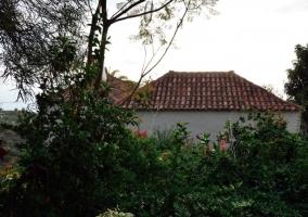 Vegetación y techos