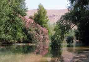 Paisaje de árboles en flor de los sotos y bosque de la ribera de Cañaverosa, Murcia