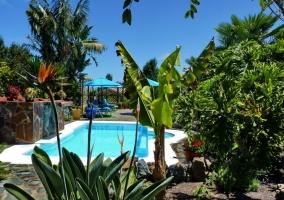 La piscina y la zona de solarium vista entre las plantas