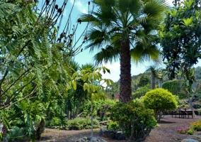 Los jardines llenos de palmeras