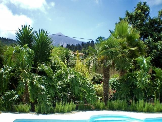 Vista desde la piscina hacia todas las plantas