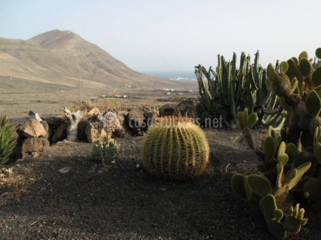 Cactus en los alrededores