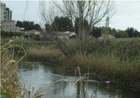 Zona del río Segura