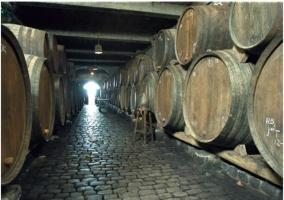 Rutas de vino a bodegas