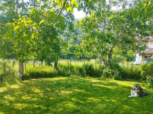 Jardín con flores y palmeras